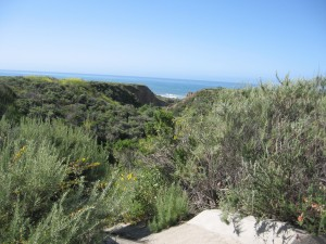 Coastal Canyon