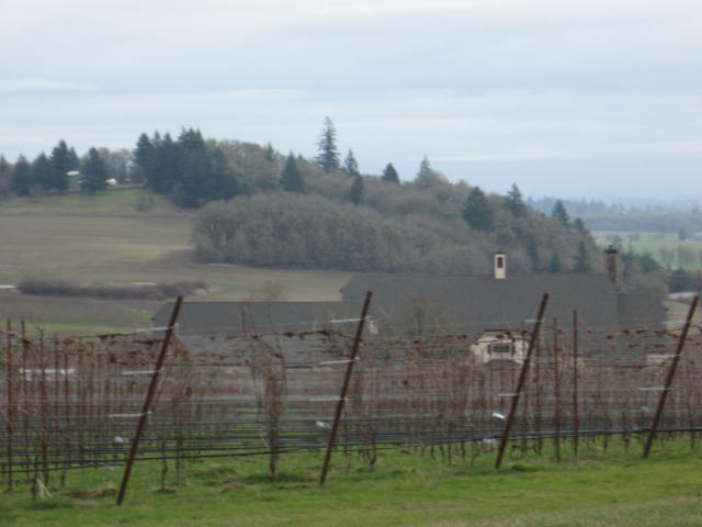 The vineyards and the house