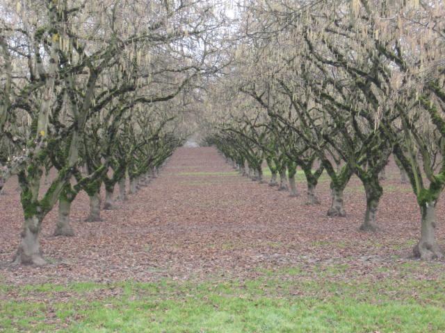 Orchard views
