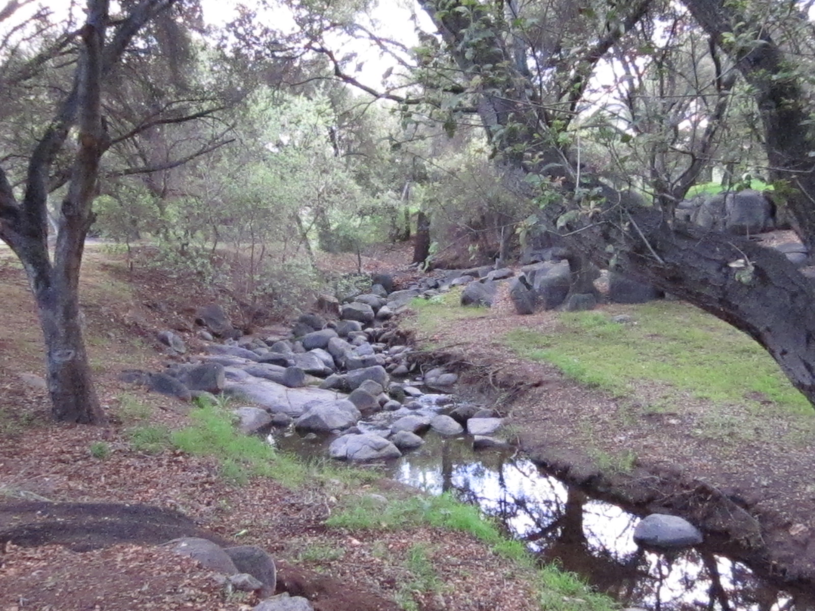 Creek through Felicita Park