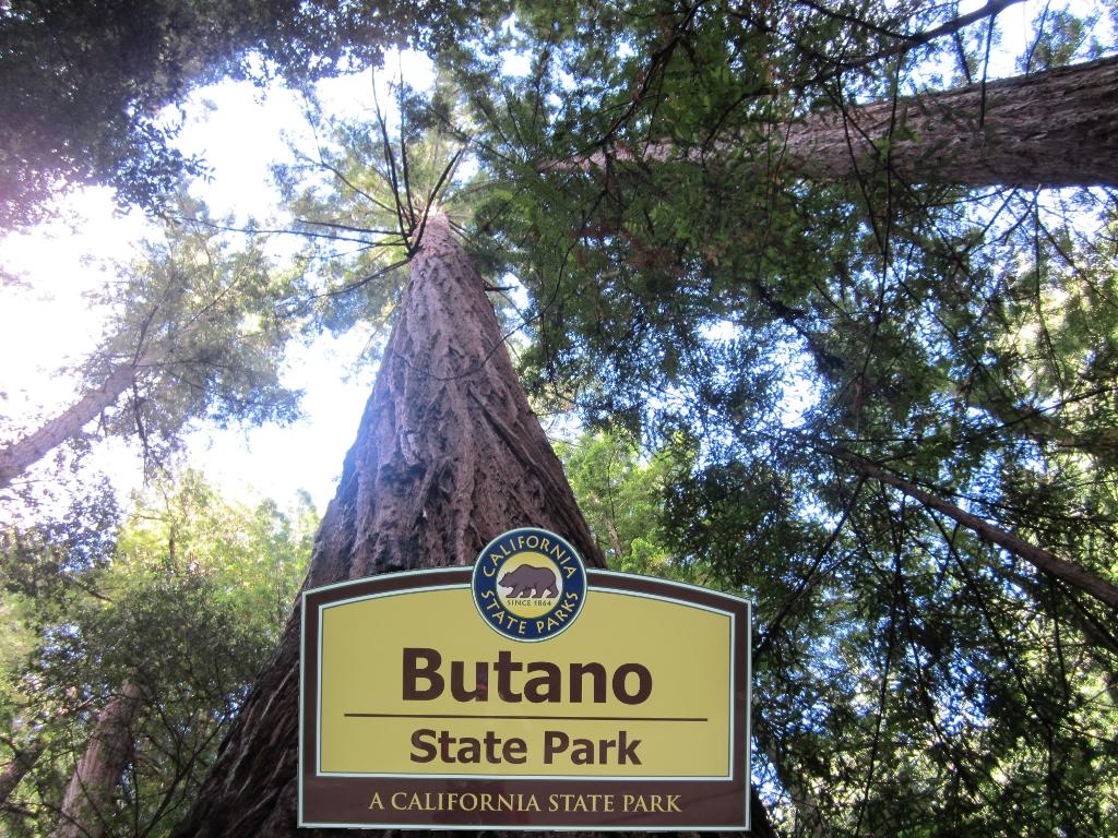 Butano Trees